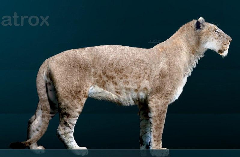800px-Panthera_leo_atrox_Sergiodlarosa.jpg